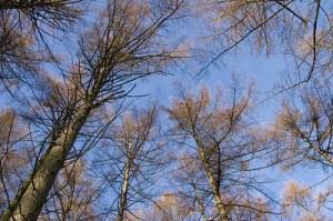 TreesNovember