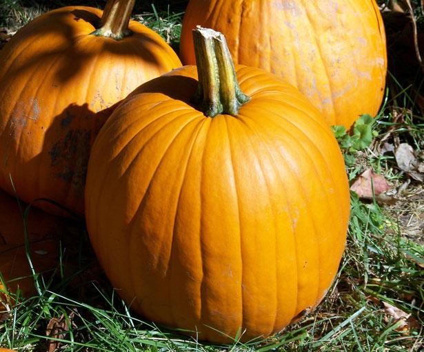 pumpkin-1303772937kg0